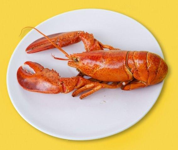 toa-heftiba-lobster
